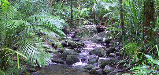 the-daintree-rainforest-walking-trails-nature-walks-preview1