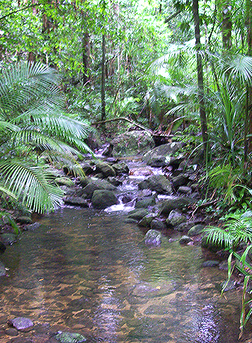the-daintree-rainforest-walking-trails-nature-walks